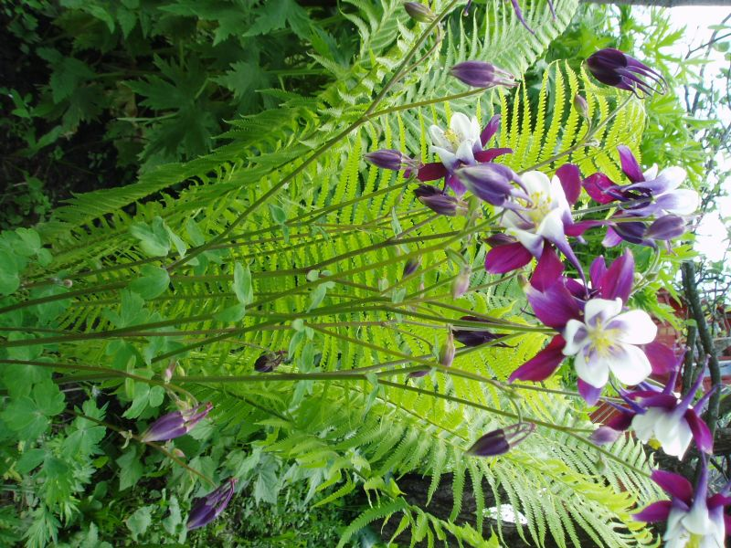 Цветок страусник
