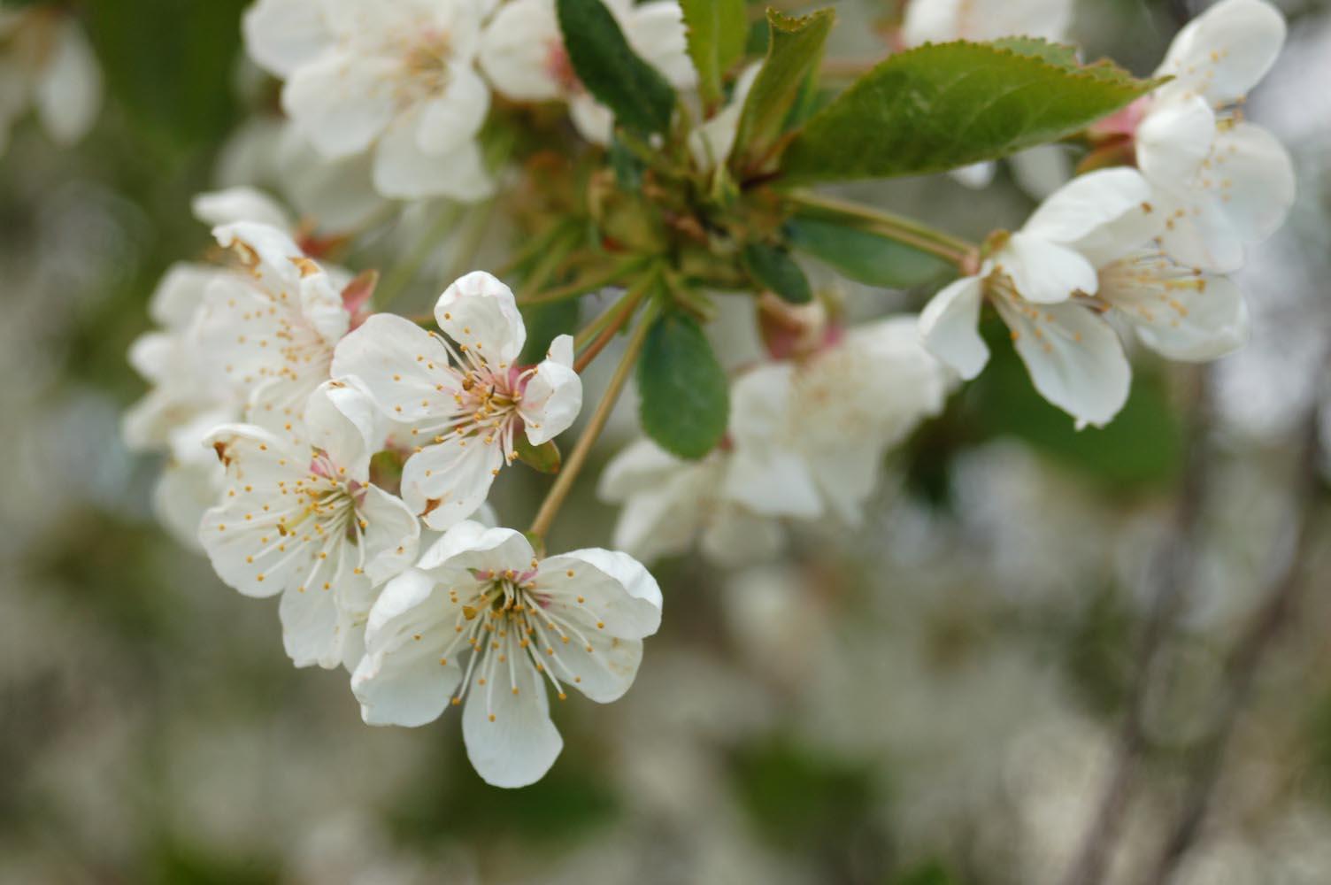 весна постоянный насморк песня