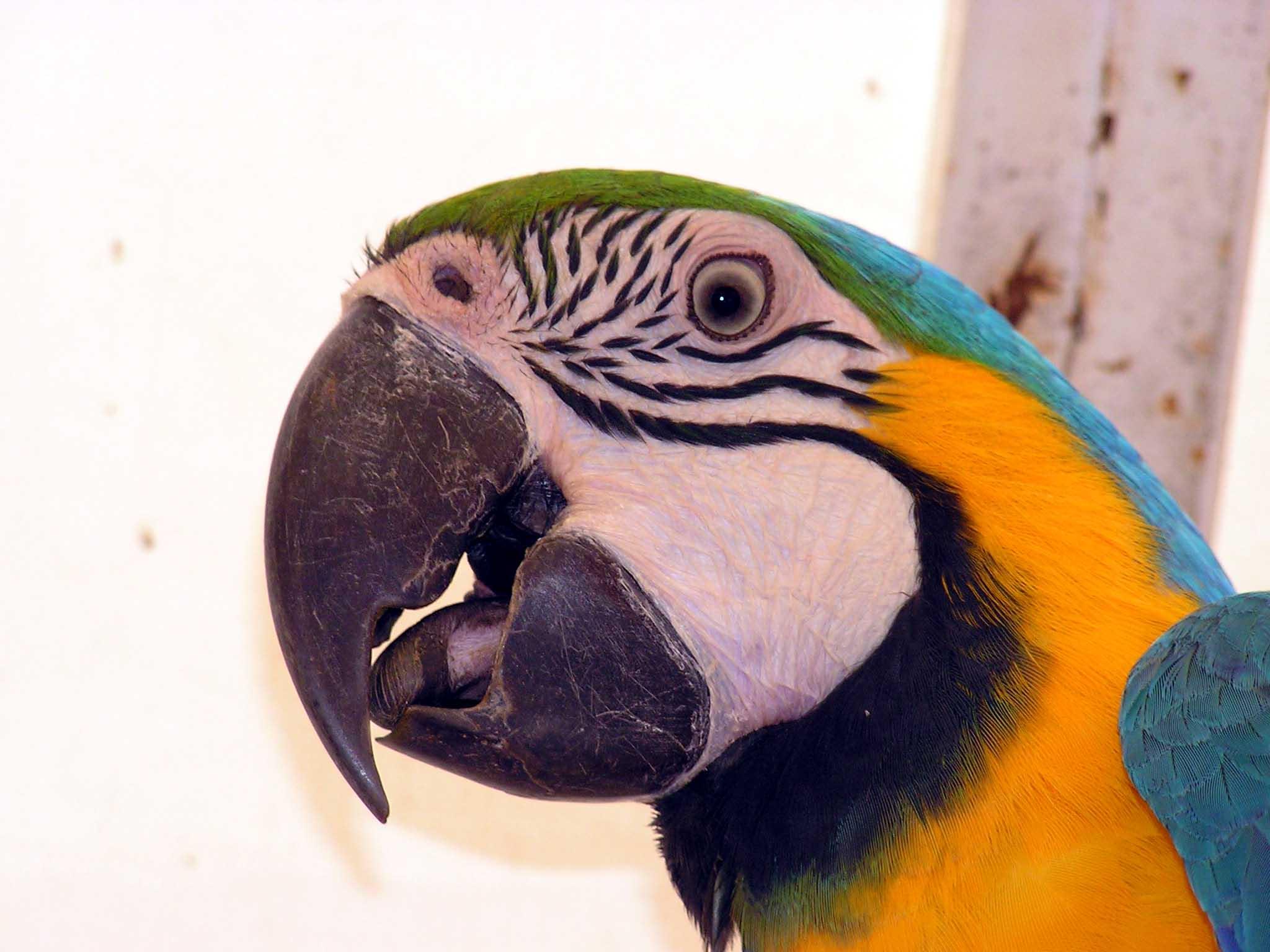 Текущее время: 07 янв 2013, 02:12 Больной попугай: Что делать, если попугай болеет.