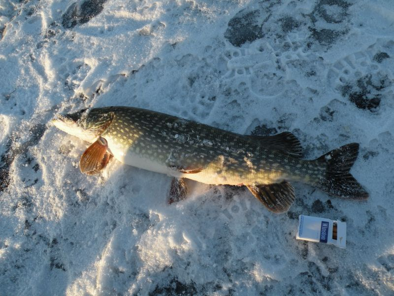клев рыбы в миассе челябинская область