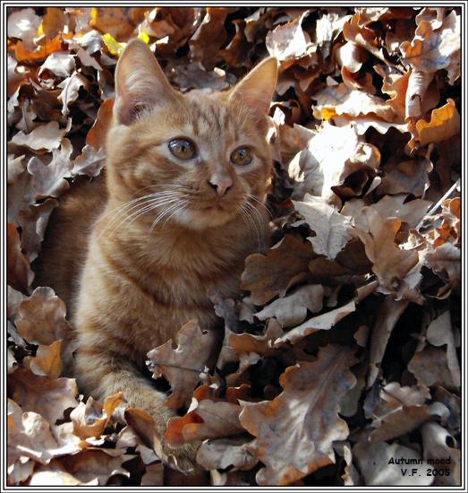 http://www.photohost.ru/pictures/68585.jpg