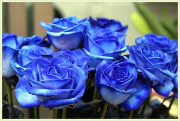 Ты - роза страсть, то колешься, то манишь, Пылаешь чувствами и...