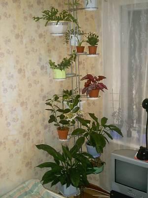 Полки для цветов от пола до потолка фото